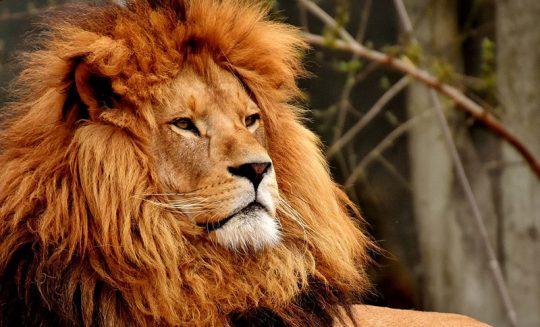 Lav – šta znači sanjati lava?